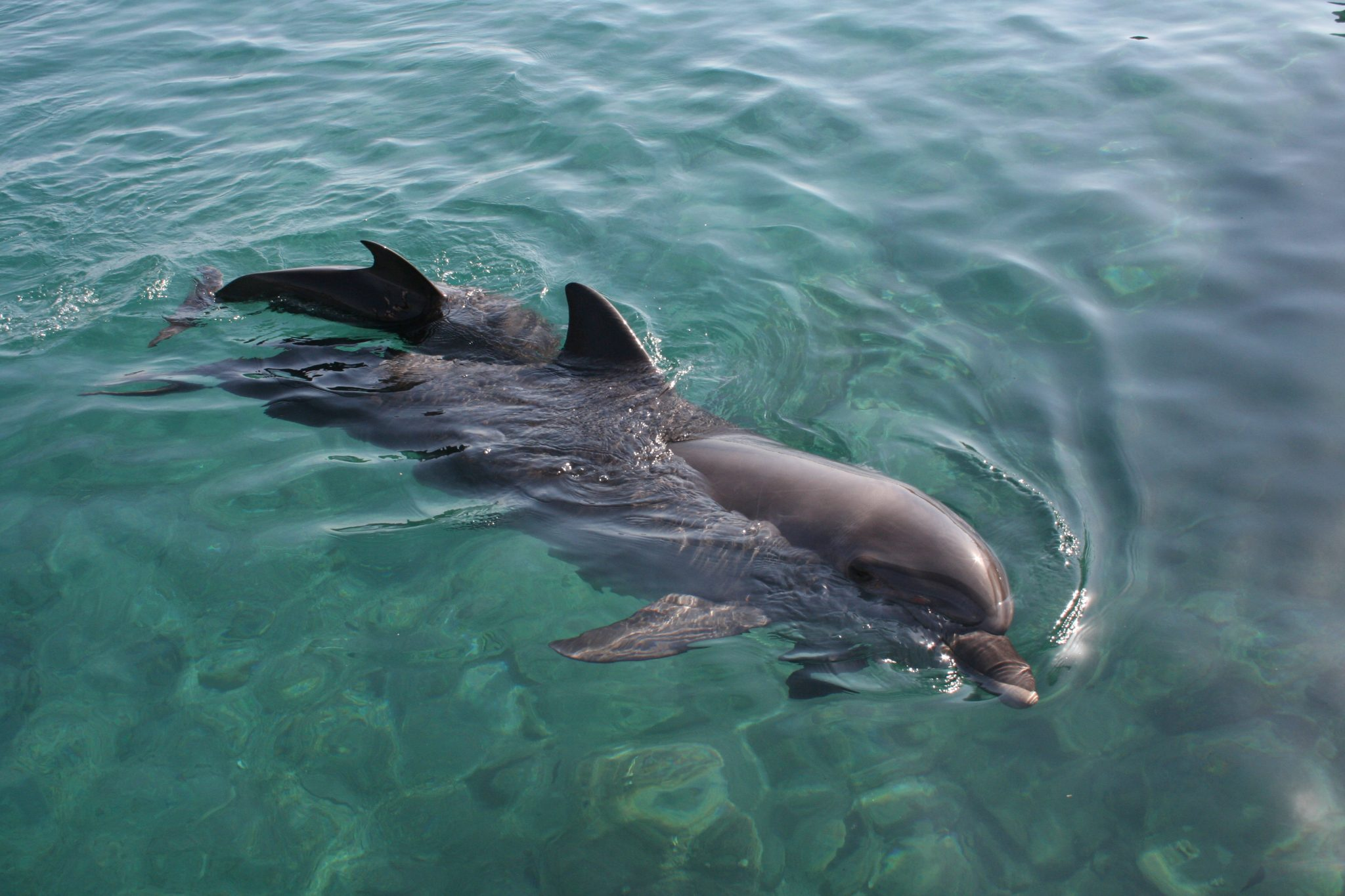 The Dolphin reef in Eilat allows people to fulfill their childhood dream of swimming with dolphins