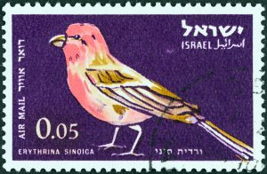 Israel has one of the highest concentrations of bird traffic in the world—500 million