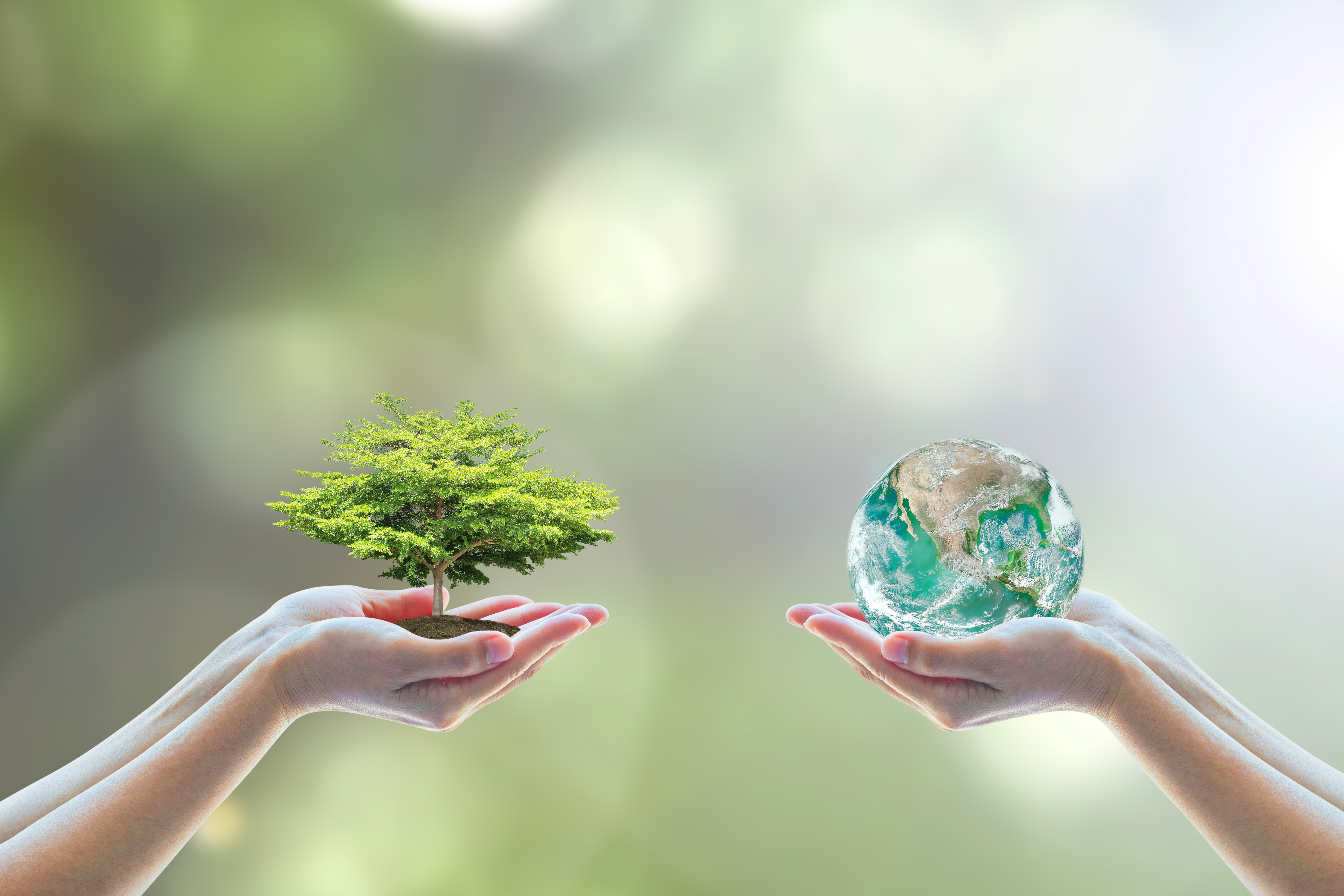 one hand holding the globe and another hand holding a tree, a symblic photo to show that Israel wants to save the world